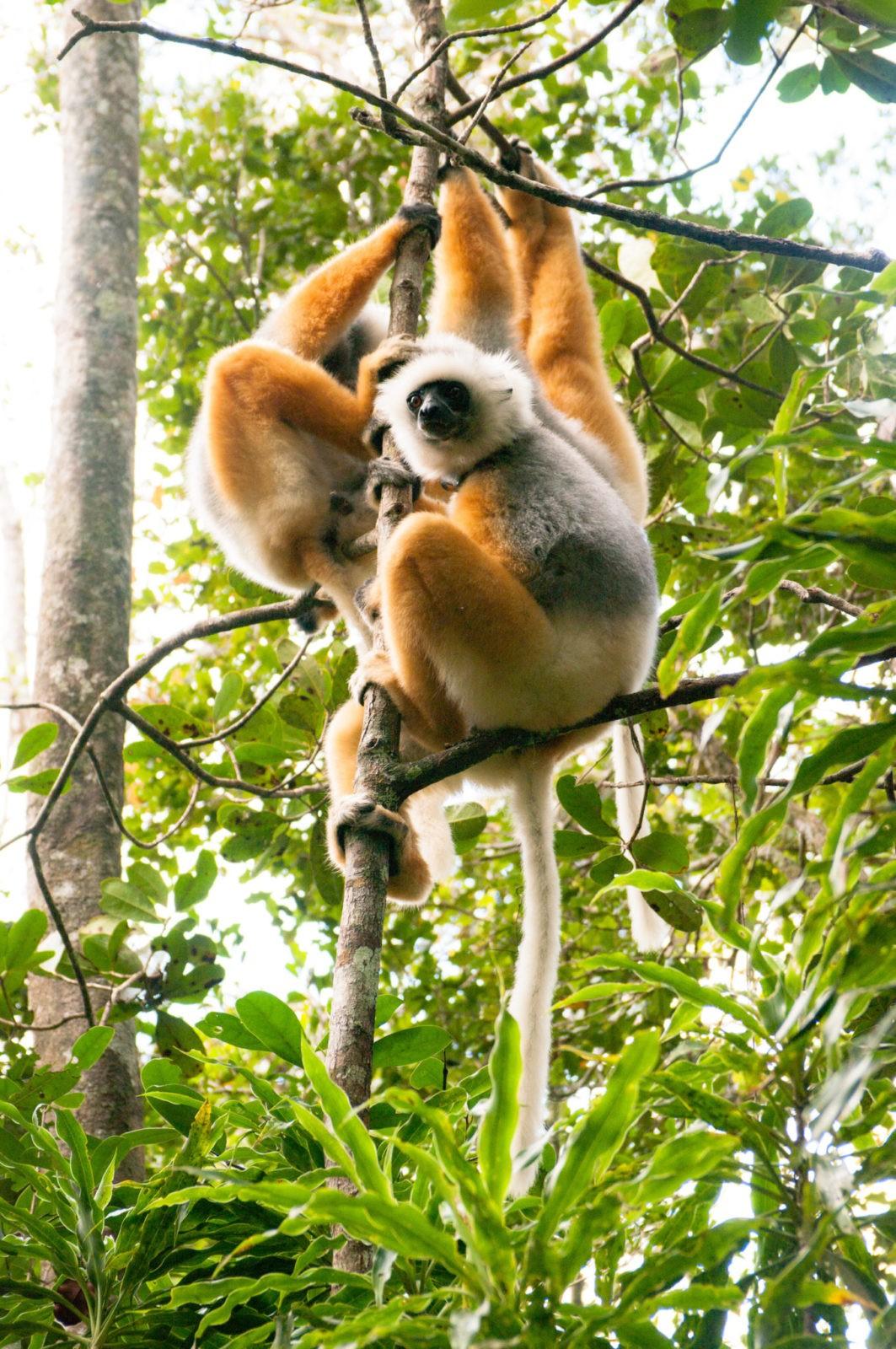 Co warto zobaczyćna Madagaskarze