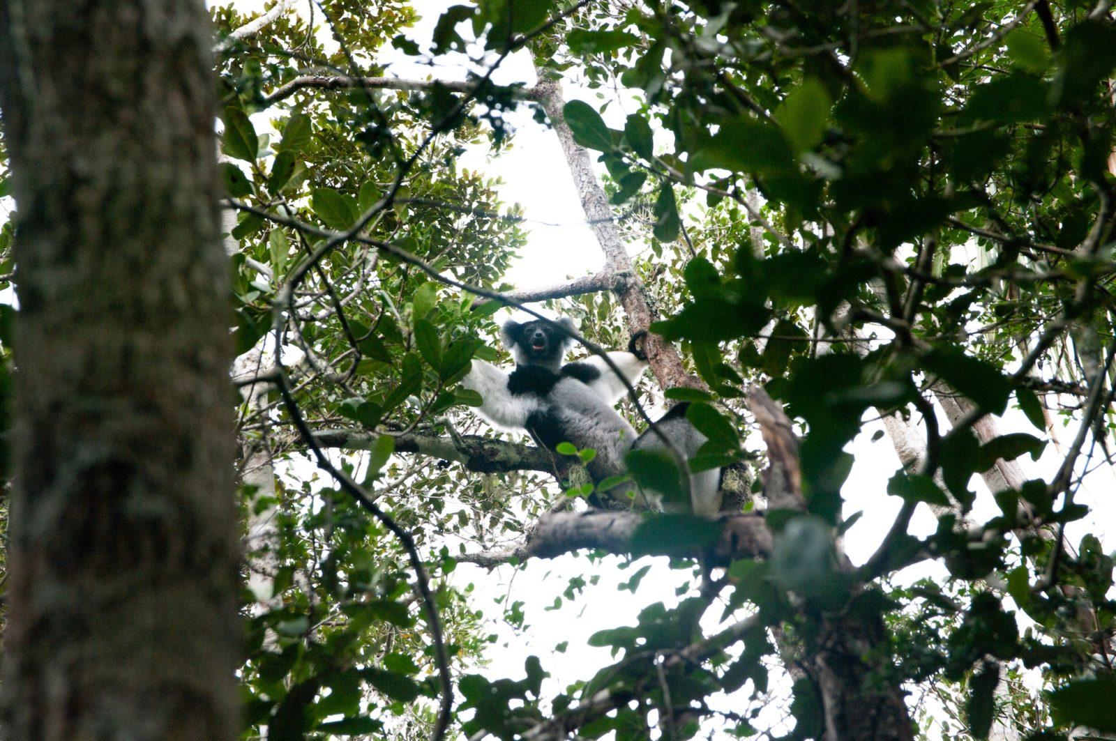 podróż na Madagaskar