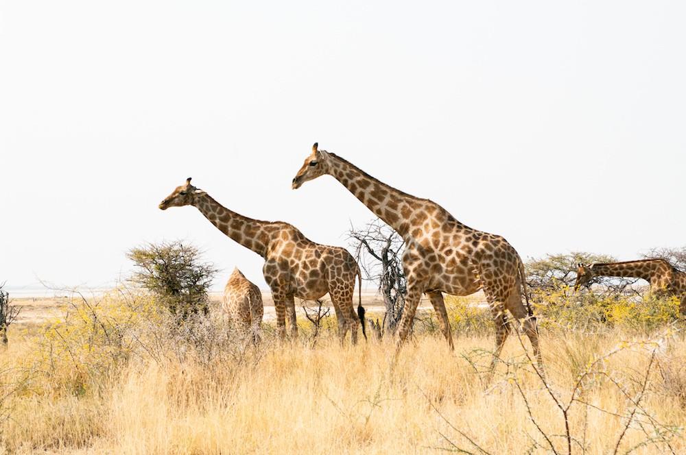 NAJLEPSZE MIEJSCA W NAMIBII-0