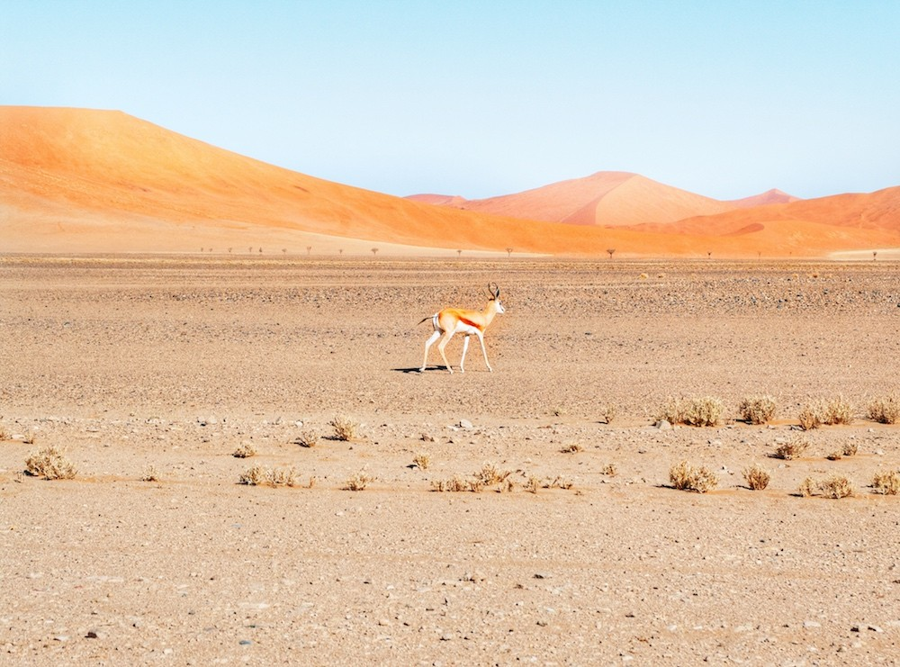 NAJLEPSZE MIEJSCA W NAMIBII